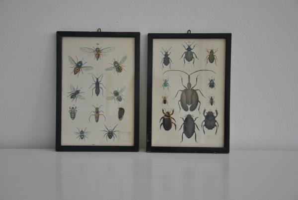 2 par billeder af forskellige billetyper